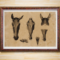 Horse skull print Anatomy poster Medical decor