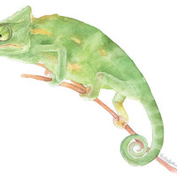 Chameleon Watercolor Painting Giclee Print Fine Art Watercolor 8 x 10