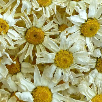 25 Dried Daisies, Real Daisies, Dry Flower, Wedding, Favors, Confetti, Dry flowers, Real Daisy,  Hostess Gift, Centerpiece, Craft Supply