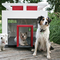 // Best Friend's Home -  designed for dogs