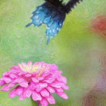 Blue Butterfly Cards 5 Zinnia Cards 4X6 by NatureImagesByDesign
