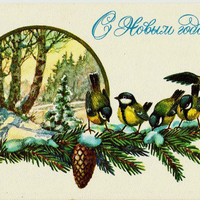 Titmouse, Winter, Birds, Vintage  Russian Postcard, Christmas, Happy New Year, print 1978