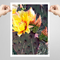 Prickly Pear Cactus flower Photography/ OPEN EDITION prints / Yellow Cactus flower photography and cacti Photography / Yellow. Red, Purple