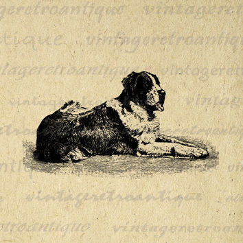 Digital Graphic Saint Bernard Dog Printable Illustration Image Download Vintage Clip Art for Transfers etc HQ 300dpi No.3121