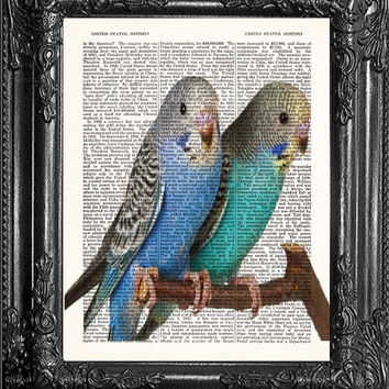 Parakeet Art-Budgie Art-Budgie Love Birds-Cute Gift Poster Dorm Wall Decor-Upcycled Dictionary Print-Antique Book Page-Print On Dictionary