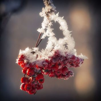 Berries in Ice by cinema4design on Crated