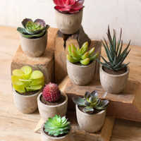 Set of 8 Miniature Succulents- One Each Variety