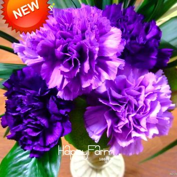 New Seeds 2017!200 Pcs/bag Purple Carnation Seeds Potted Courtyard Garden Plants Dianthus Caryophyllus Flower Seed,#OI1VH8