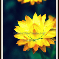 Yellow Flower Photograph 5x7 by PurdyPhotography on Etsy