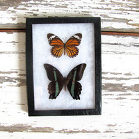 20% OFF SALE / Vintage Framed pressed Butterflies. Specimen box with green and yellow butterflies. Wall hanging picture