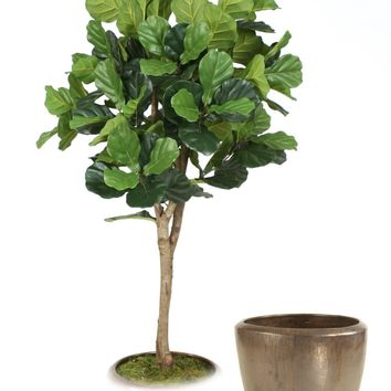 6' Fiddle Leaf Fig Tree In Metallic Bronze Stoneware Pot