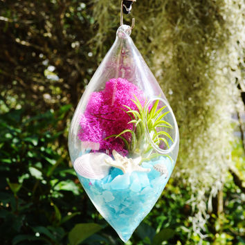 Elle Blue and Fuchsia Terrarium  - Diamond Teardrop Hanging Terrarium Kit with Tillandsia  Air Plant ~ Gift Idea ~ Housewarming
