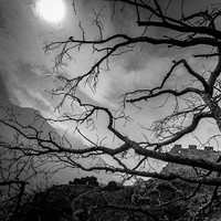 Tree and full moon by ancient castle ruins. Surreal gothic photography. Spooky scary wall art home decor. Black white shadow photograph art