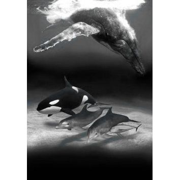 Dolphins And Whales poster Metal Sign Wall Art 8in x 12in Black and White