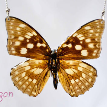 Real butterfly in Resin, Butterfly Necklace, Necklace resin butterfly, Pendant real butterfly, Resin Butterfly, Butterfly Jewelry, Butterfly