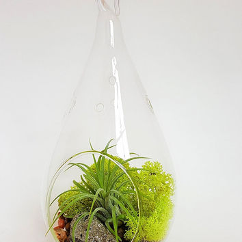 Bliss Gardens Air Plant Terrarium  / Moss and Geode / Green Goddess