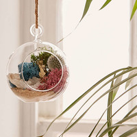 DIY Hanging Geode Terrarium - Urban Outfitters