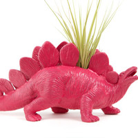 Dinosaur planter,Mambo Pink Office Home Desk Decor, with air plant