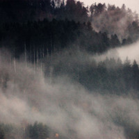 Modern Nature Fine Art Photography Print - Dark Fog - Gift for Him for Her for Friend - Flying Forest