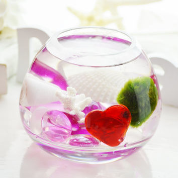 Valentine Marimo Moss Ball ~ Japanese Moss Ball Aquatic Terrarium ~ Pink Nuggets ~ Heart and Shells ~ Glass Vase Kit ~ Gift Idea ~ For Her