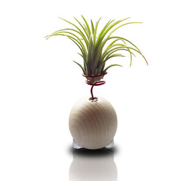 Air plant holders Air plant display Indoor wood planter Planter desk modern Wood indoor planter Planter Modern planter Desk planters