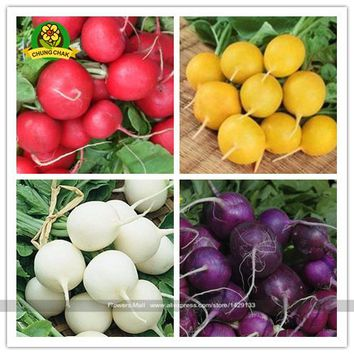 Radish seeds 200pcs Cherry Belle Radish Seeds 100% Real seed Delicious Vegetable Carrot Seeds Home Garden Plant Free Shipping