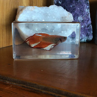 Siamese Fighting Fish Paperweight