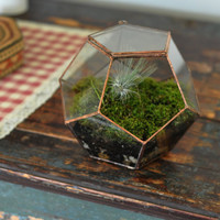 Universe Terrarium Kit, large dodecahedron glass terrarium with a hinged door -- copper or silver color -- eco friendly