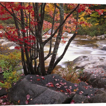 Swift River Flowing Through Fall Colored Forest