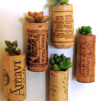 5 Succulent Wine Cork Planters, mounted on magnets