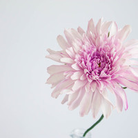 Dahlias flower, Bridal bouquet, bridesmaids bouquet, wedding bouqet, Large Purple Pink Dahlias
