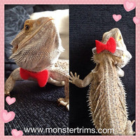 Bearded dragon Bow tie
