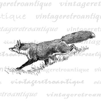 Fox Graphic Printable Digital Animal Image Download Illustration Jpg Png Eps  HQ 300dpi No.4122