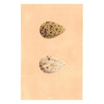Pre-owned Antique Eggs 1875 Print