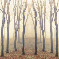 Tree Photography Landscape Photography Enchanted Woodland Dreamy Nature Golden brown Wood
