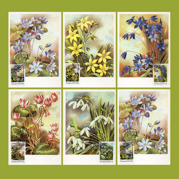 Flora of the USSR (Artist I. Sushchenko) - Set of 6 Maxi-Card & Stamped Envelope - Printed in the USSR, Moscow, 1983