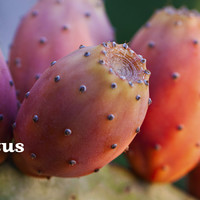 Cool Cactus - Exotic, Fruity Blend Combines Green Tea With Pineapple And Prickly Pear | DAVIDsTEA