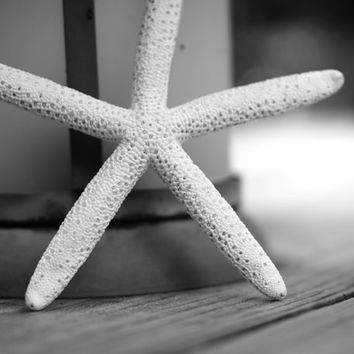 Black and White Photography - Starfish, Nautical Lantern - Fine Art Still Life Photography - Large Beach Cottage Home Decor Wall Art
