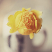 Yellow flower print- mini rose, romantic, girly, nursery decor, floral, vase, rustic, shabby chic, fine art, 8x10 photograph
