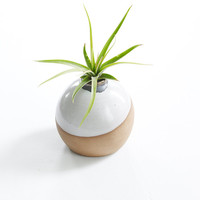 Handmade Rustic Modern Vase for Air Plant MADE TO ORDER