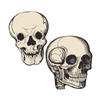 Beistle Halloween Party Decoration Mini Skull Cutouts 5- Pack of 24