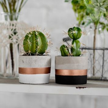 Cactus Arrangements in Concrete and Copper Pots