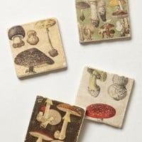 Botticino Marble Coasters by Anthropologie
