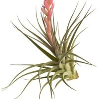 Houston Airplant