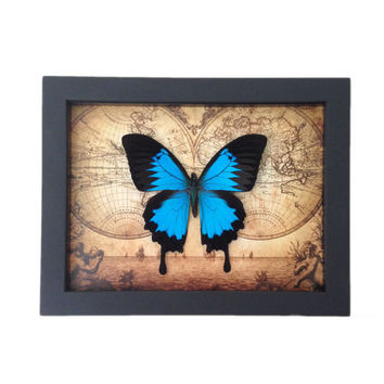 Real Framed Butterfly Home Decor - Insects, Vintage, Map, Office, Furniture, Bugs,Taxidermy, Natural, Unique, Art, Gift, Special Occasion