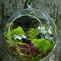 Faerie Orb . Glass Orb with Forest, Spanish and Reindeer Moss . Faerie Gardens . Magical Garden Decor