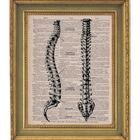 Human Spine Anatomy- Vintage Dictionary Print-  8x10