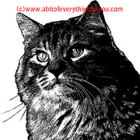 fluff tabby cat printable art print png clipart download digital image graphics printable animal pets black and white artwork