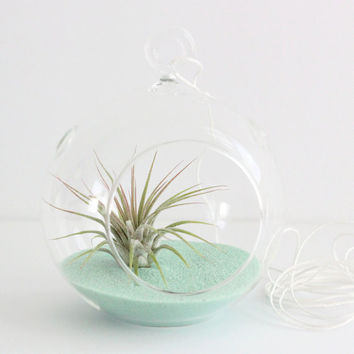 Set of 10 Air Plant Terrarium Kit with Mint Sand - Great for Bridesmaids, Parties, and Shower Gifts