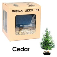 Eve's Cedar Bonsai Seed Kit, Woody, Complete Kit to Grow Cedar Bonsai from Seed